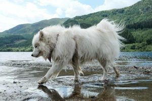 How to Positively Train Off Leash Recall