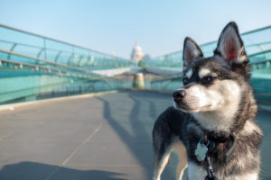 Man's best friend: how we can now do more with our dogs