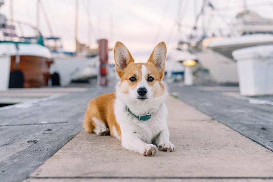 20 most intelligent dog breeds