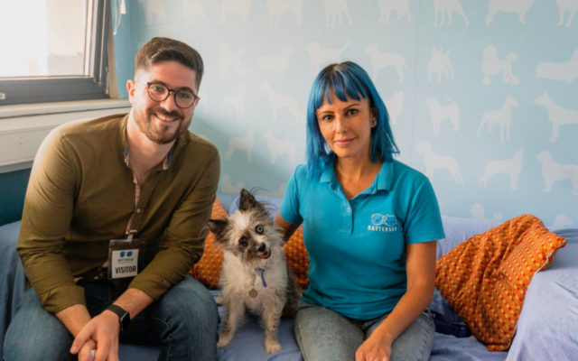 Battersea Dogs and Cats Home interview