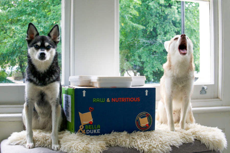 Skye and Copper with their Bella and Duke delivery (Photo: lifewithkleekai)