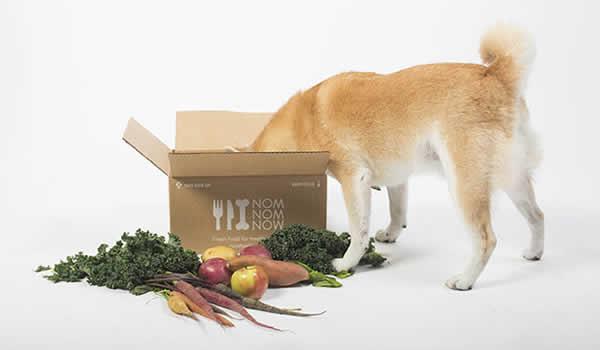 Best dog food delivery