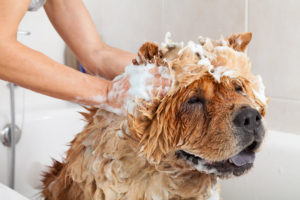 The 7 Best Dog Shampoo In 2019