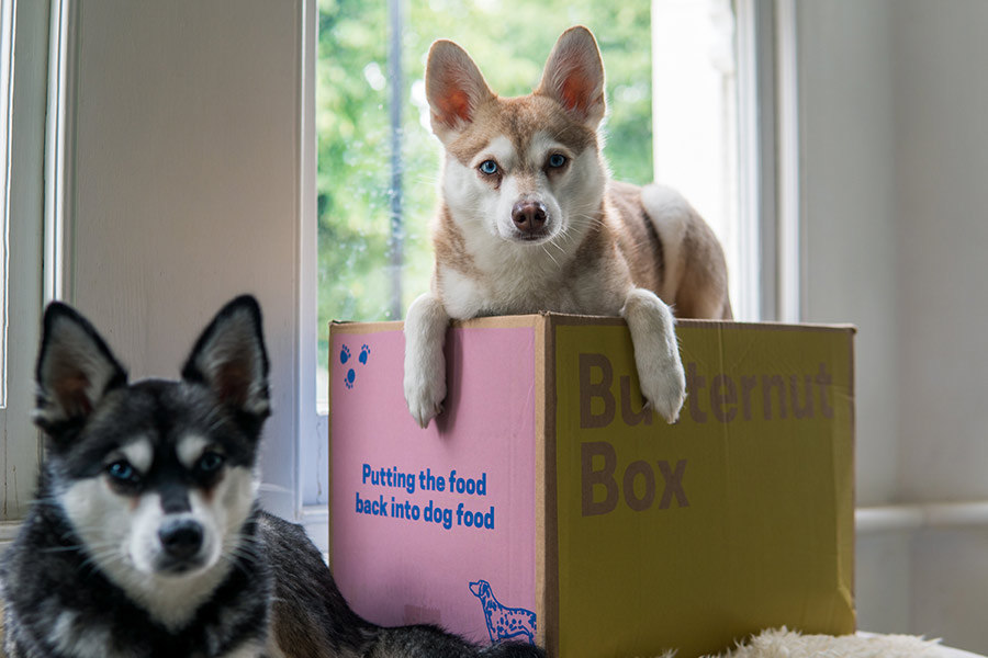 Alaskan Klee Kai Copper and Skye with their Butternut Box delivery (Photo: @lifewithkleekai / Instagram)