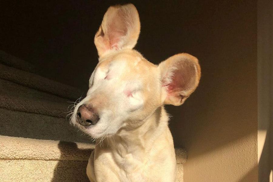 Cabo the Blind Doggo (Photo: @cabotheblinddoggo / Instagram)