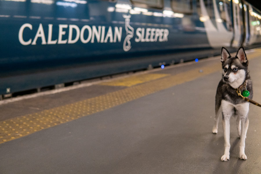 Alaskan Klee Kai Skye next to the Caledonian Sleeper (Photo: lifewithkleekai / Instagram)