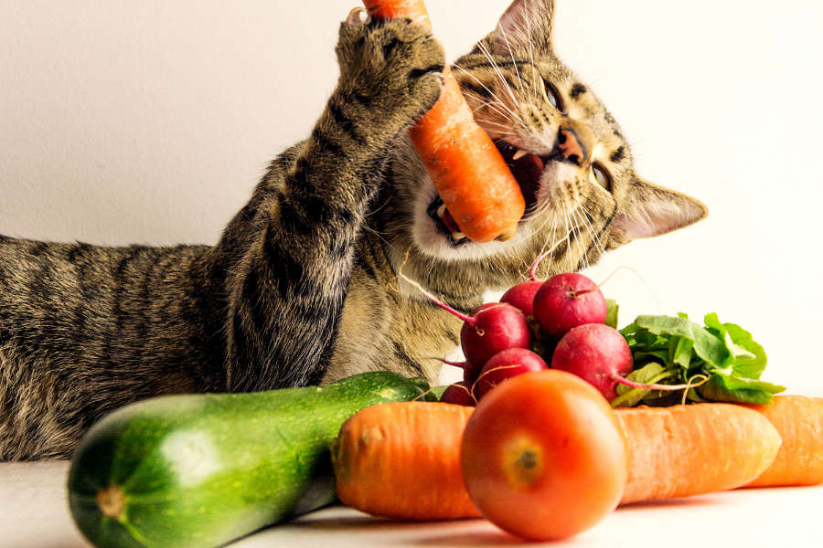 Cat enjoying a fresh food diet (Photo: Adobe Stock)