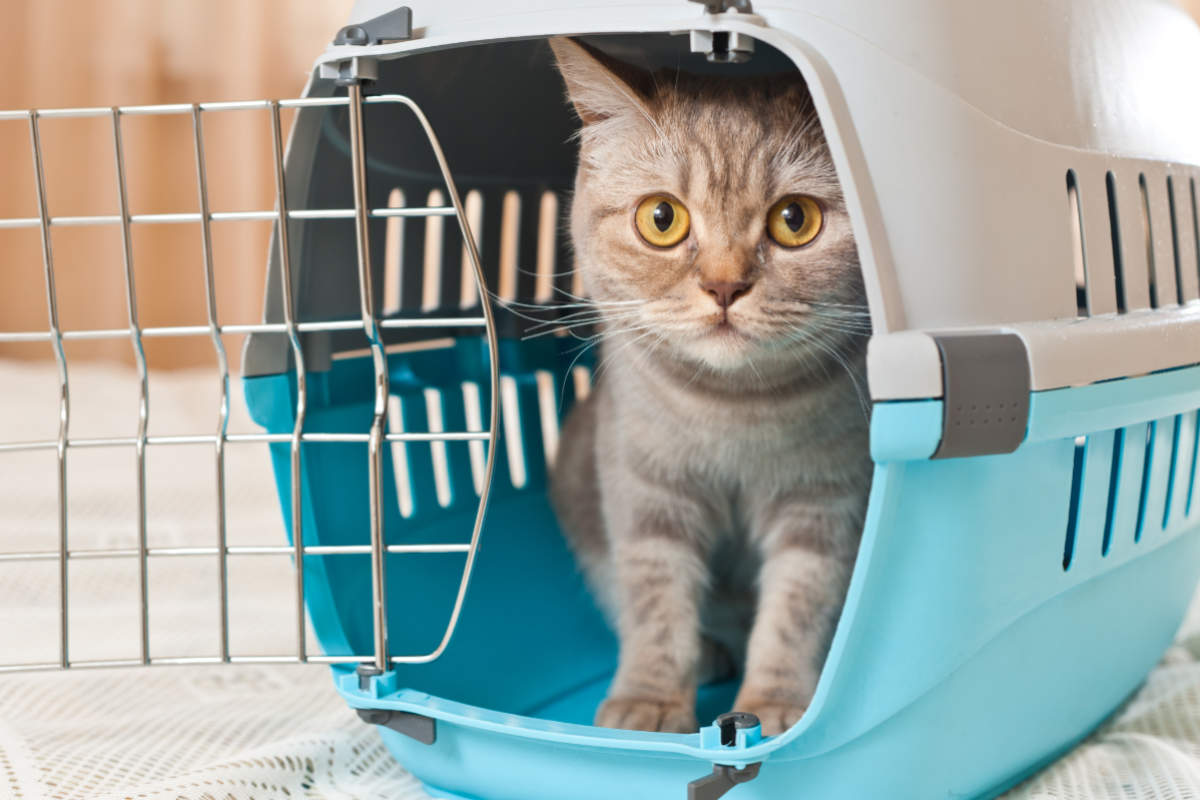 Kitten sits in travel crate (Photo: Adobe Stock)