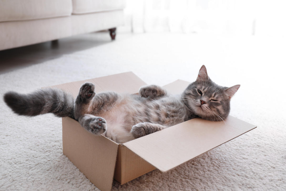 Cute grey tabby cat in cardboard box on floor at home (Photo: Adobe Stock)