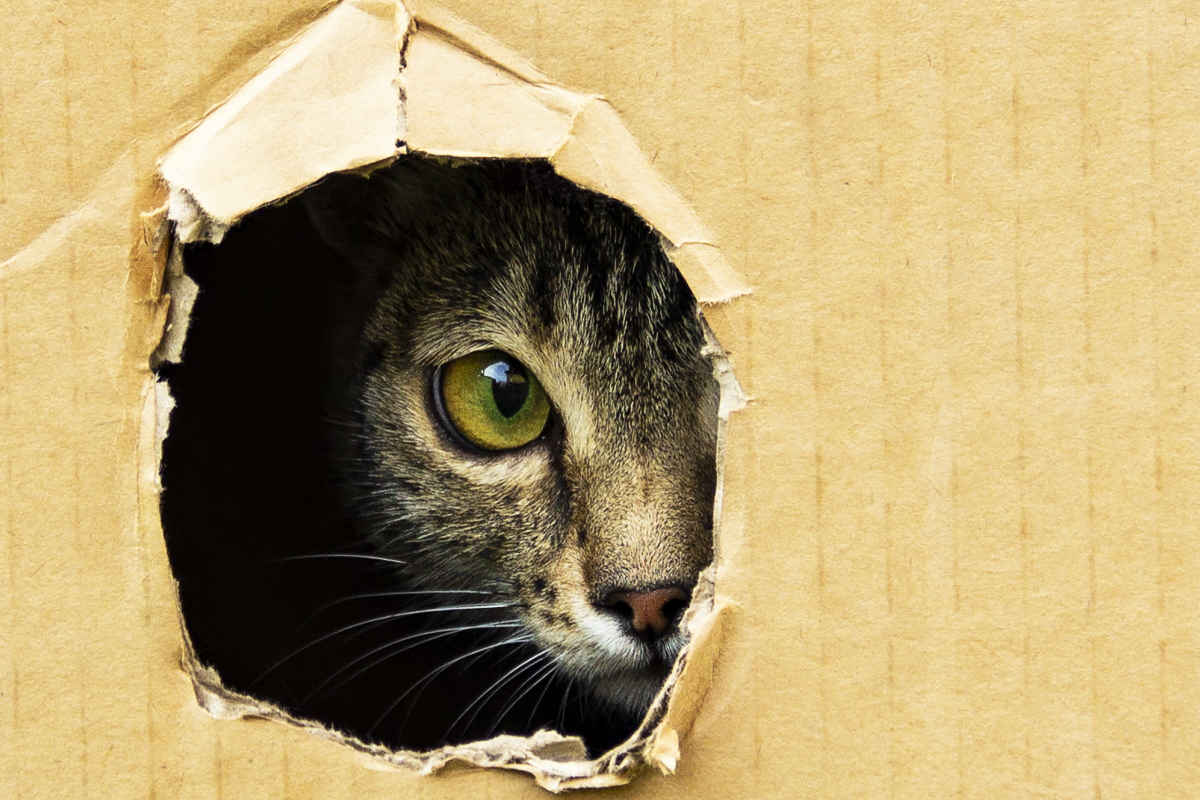 Cat in a box (Photo: Adobe Stock)