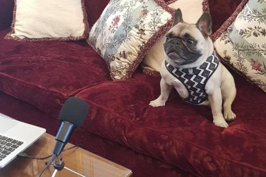 Chunki the French Bulldog (Photo: chunkithefrenchie / Instagram)