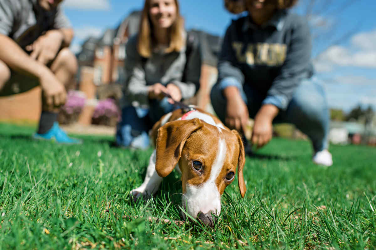 Clarion students play with a dog (Photo: Clarion University)