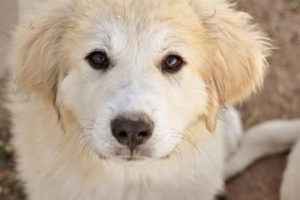 Colorado Mountain Dogs Questions And Answers