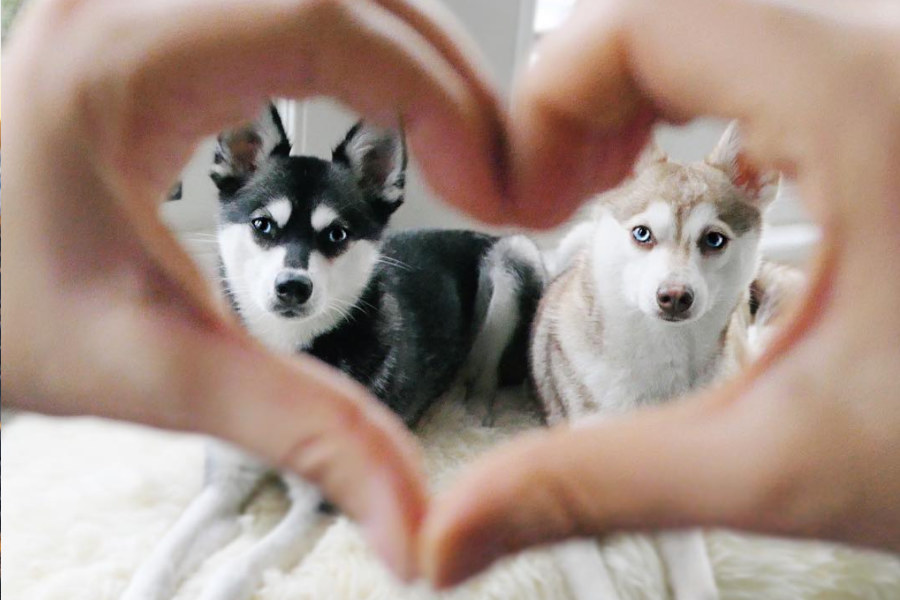 Copper and Skye (Photo: lifewithkleekai / Instagram)