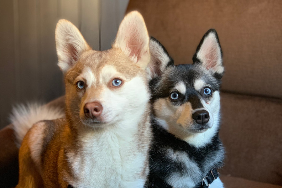 Copper and Skye at the Ladywell Tavern (Photo: @lifewithkleekai / Instagram)