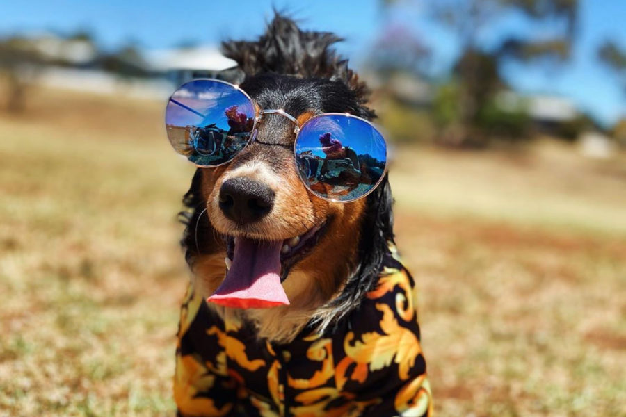 Arlo the Dachshund (Photo: @arlo.thedachshund / Instagram)