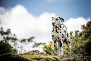 20 Dalmatians to follow on Instagram