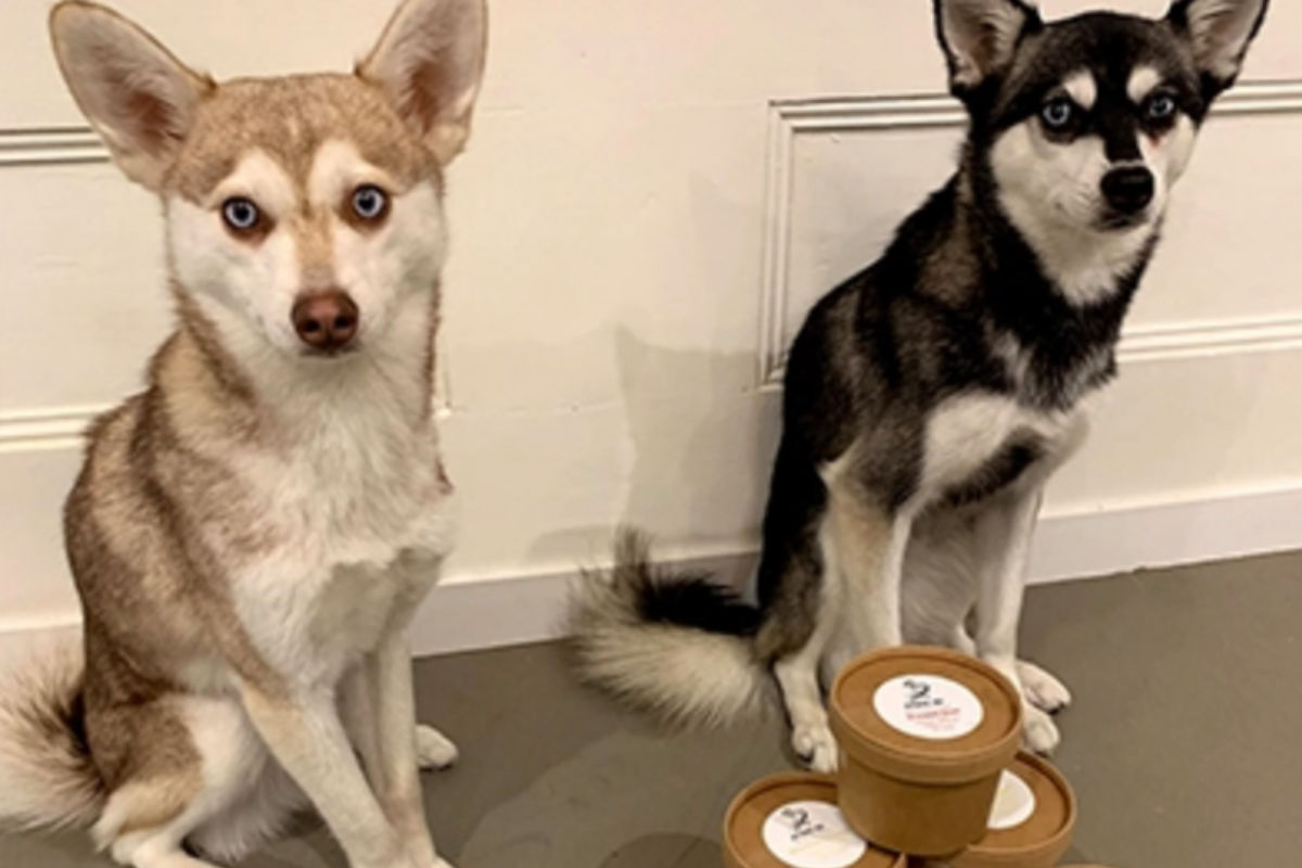 Copper and Skye with their Different Dog delivery (Photo: lifewithkleekai / Instagram)