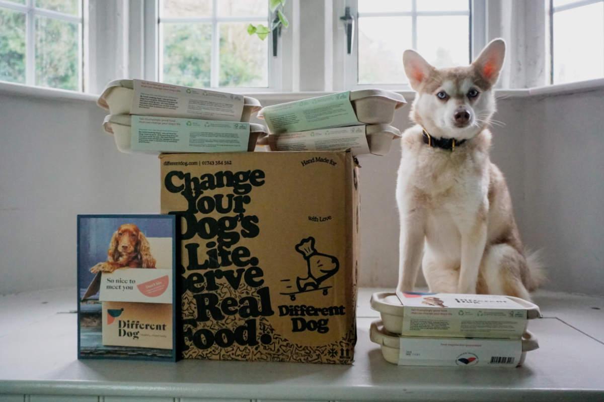 Alaskan Klee Kai with Different Dog (Photo: lifewithkleekai / Instagram)