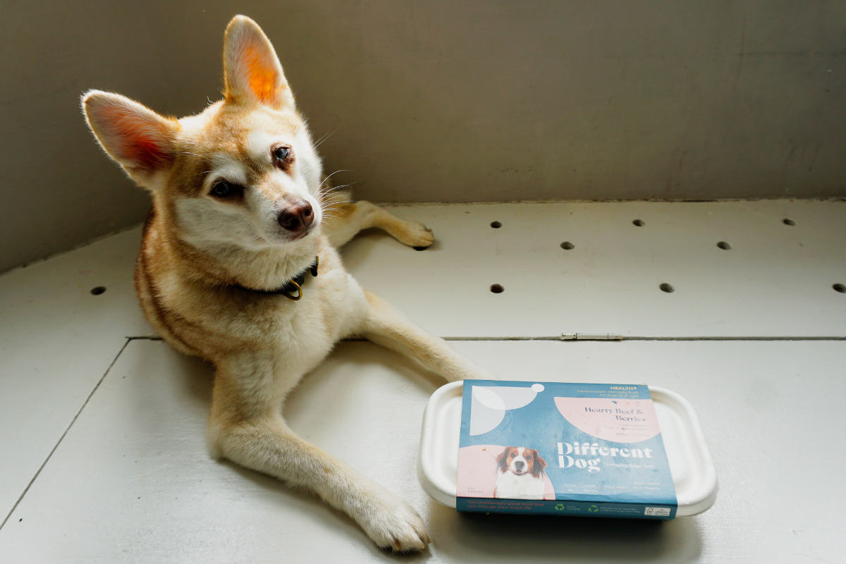 Copper and Different Dog's Health+ range (Photo: lifewithkleekai / Instagram)