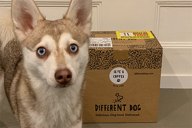 Copper with his Different Dog delivery (Photo: lifewithkleekai / Instagram)