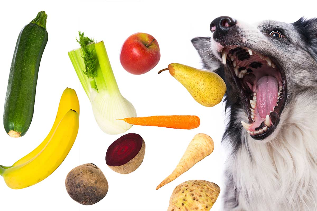 Dog opens wide for fruit and vegetables (Photo: Adobe Stock)