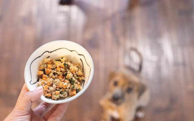NomNomNow is a premium dog food delivery service started in California (Photo: NomNomNow)