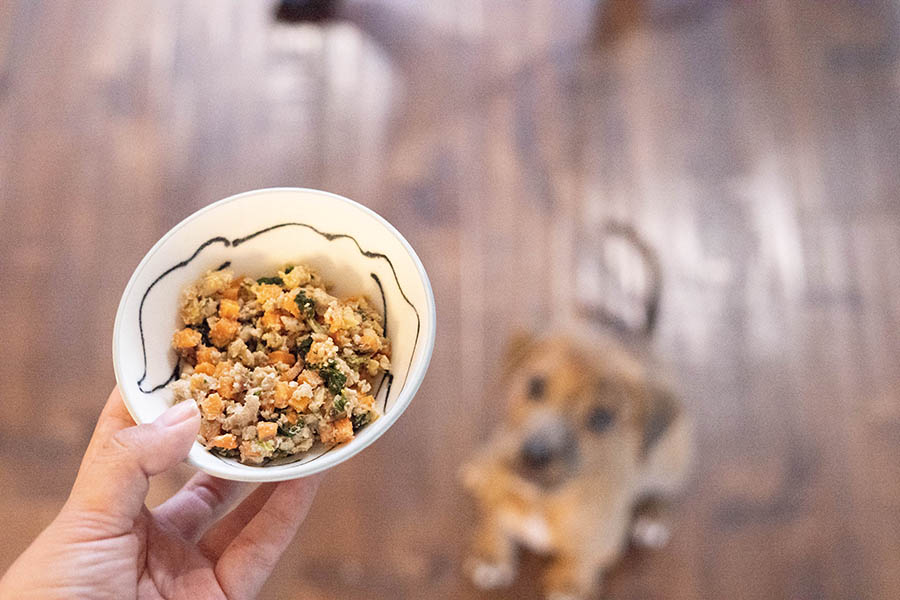 Freshly cooked dog meals delivered to your door (Photo: Nom Nom)