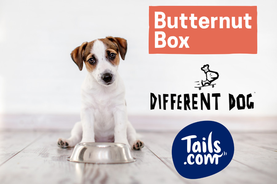 Best Dog Food Delivery in the UK