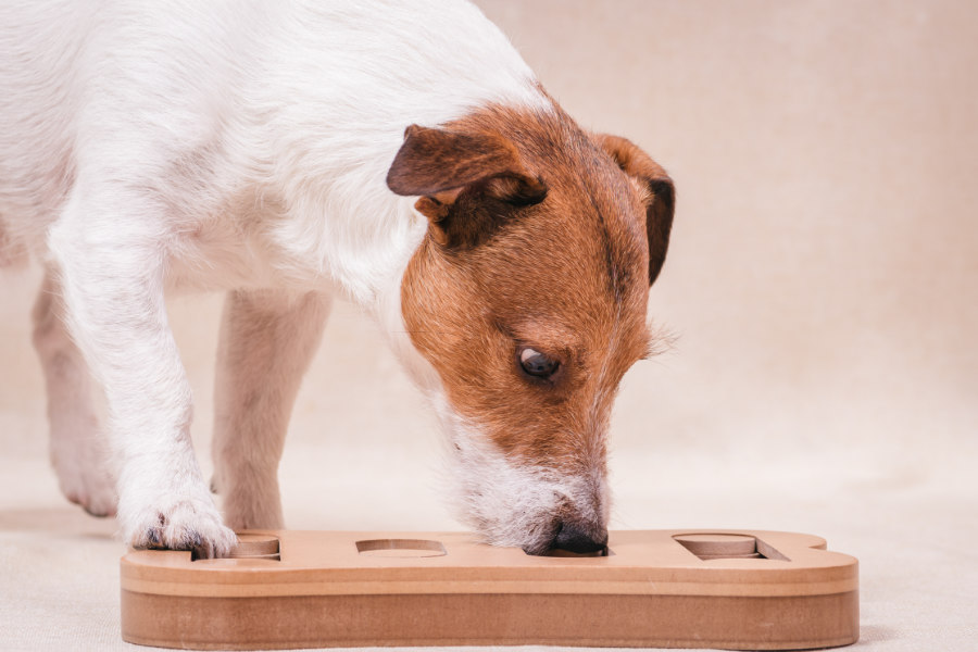 Dog tries to work out puzzle toy (Photo: Adobe)