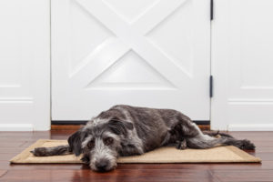 Dog Separation Anxiety interview