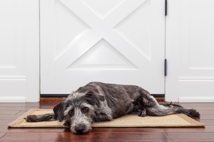 A dog patiently waits for owner to return (Photo: Adobe Stock)
