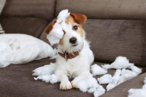 How To Prevent Dog Separation Anxiety