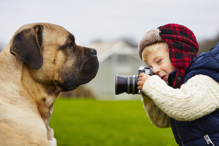 Mastiff caught on camera (Photo: Adobe Stock)