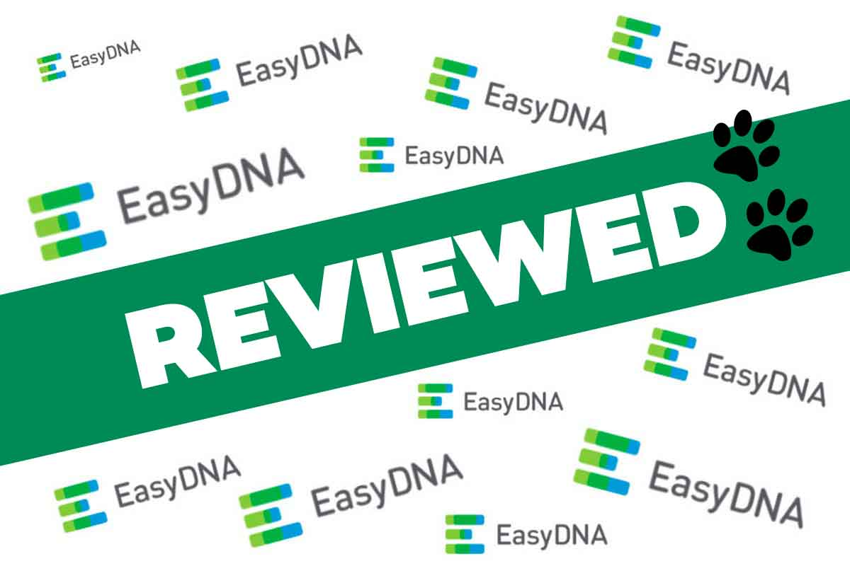Easy DNA Review