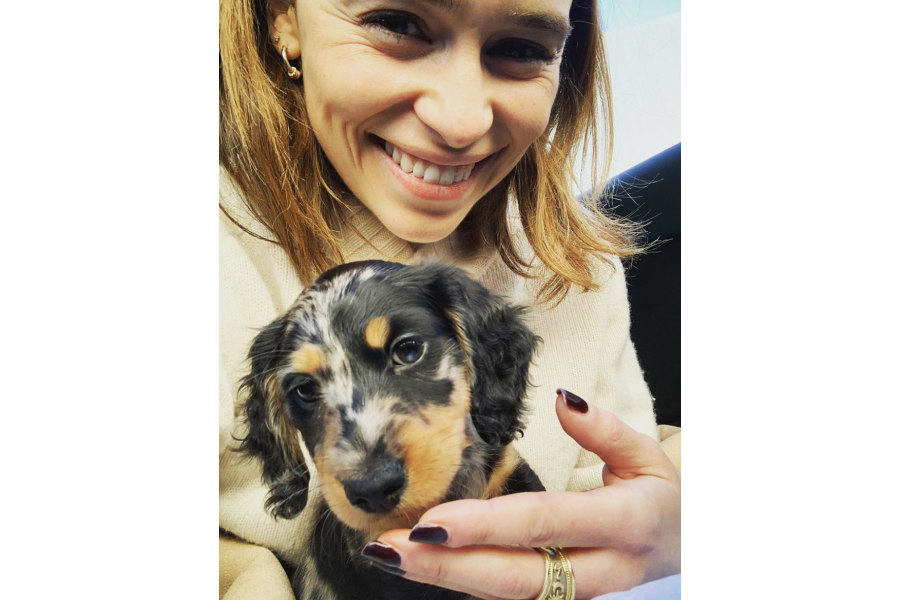 Emilia Clarke with her new Dachshund puppy Ted (Photo: Emilia Clarke / Instagram)