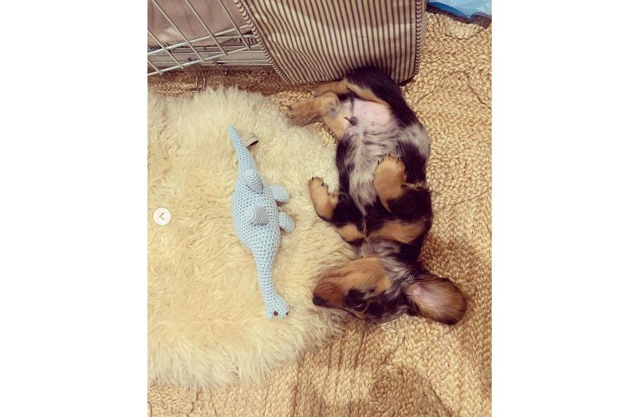 Emilia Clarke's new Dachshund puppy Ted (Photo: Emilia Clarke / Instagram)