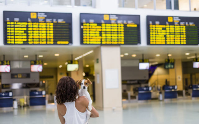 How to fly with your dog from USA to UK