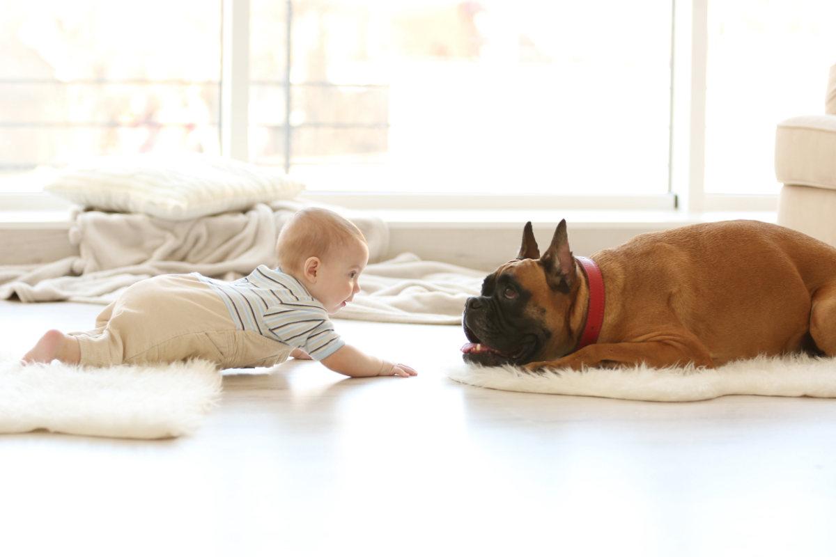 Baby crawls to Frenchie (Photo: Adobe Stock)