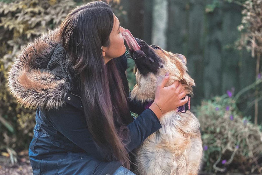 Lola the German Shepherd (Photo: @lola_our_gsd / Instagram)