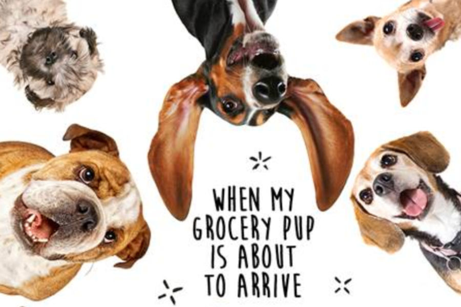 Grocery Pup was founded in Austin, Texas in 2017 (Photo: Grocery Pup)