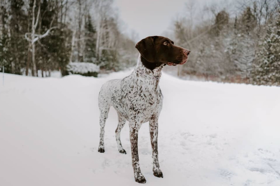 Charley and Murphy the German Shorthaired Pointers (Photo: murphyxcharley / Instagram)