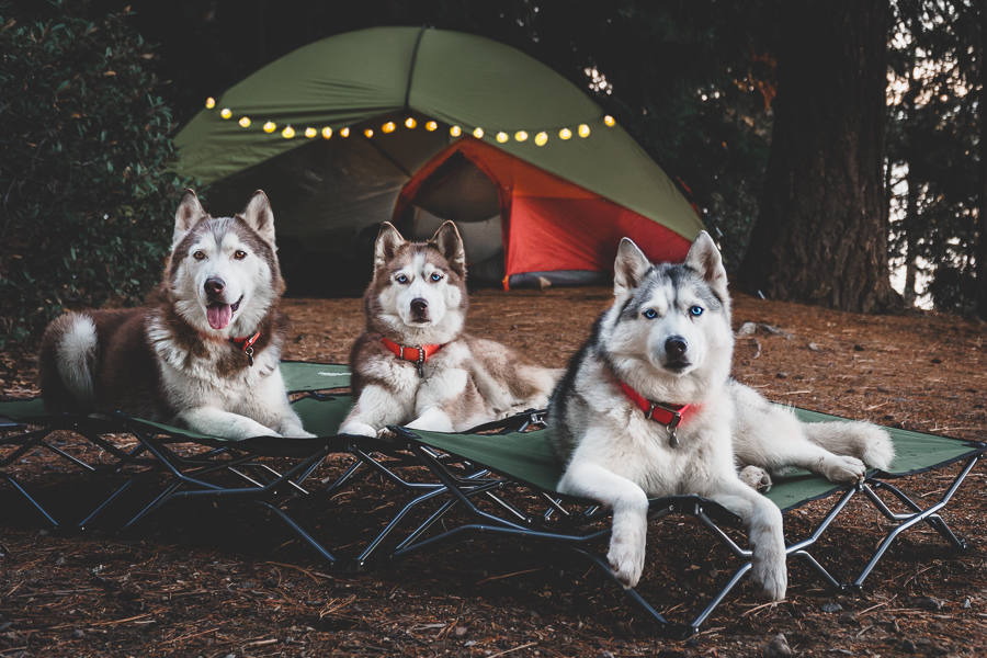 The Husky Squad at the campsite (Photo: The Husky Squad / Instagram)