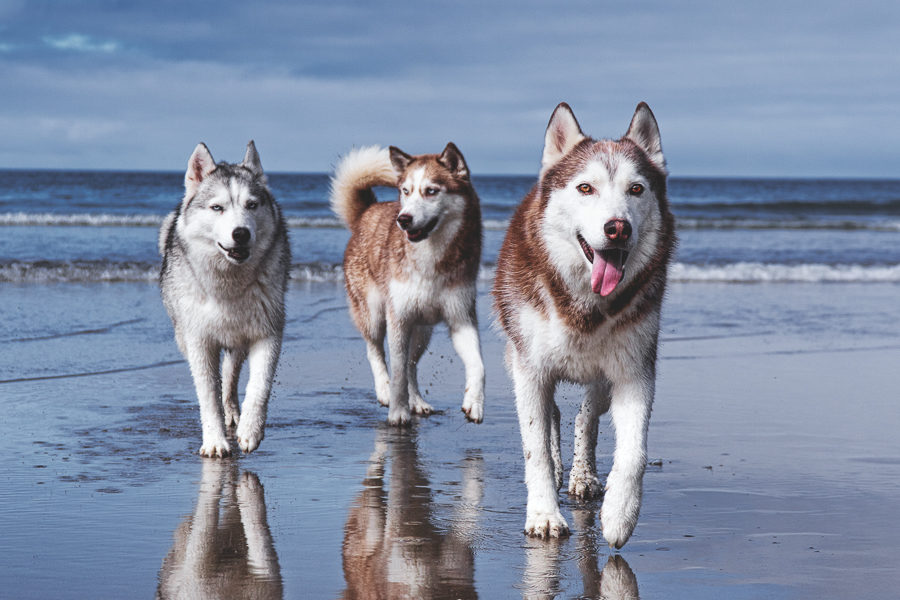The Husky Squad on the beach (Photo: The Husky Squad / Instagram)