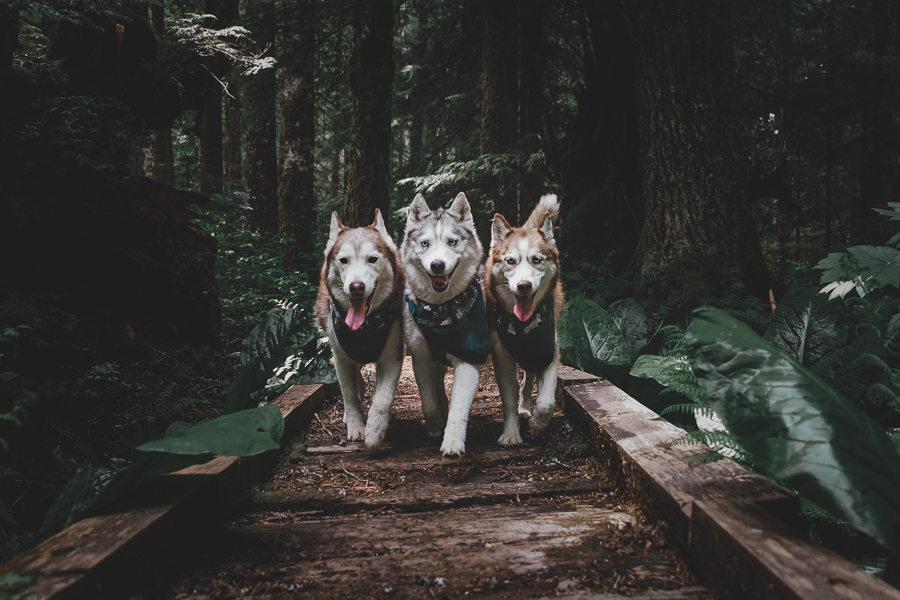 The Husky Squad explore a forest (Photo: The Husky Squad / Instagram)