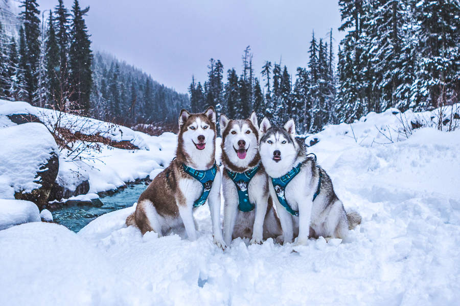 The Husky Squad pose in the snow (Photo: The Husky Squad / Instagram)