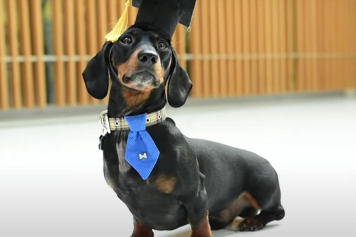 Jimmy Chipolata the Therapy Dog at Nottingham Trent University (Photo: Jimmy Chipolata / Instagram)