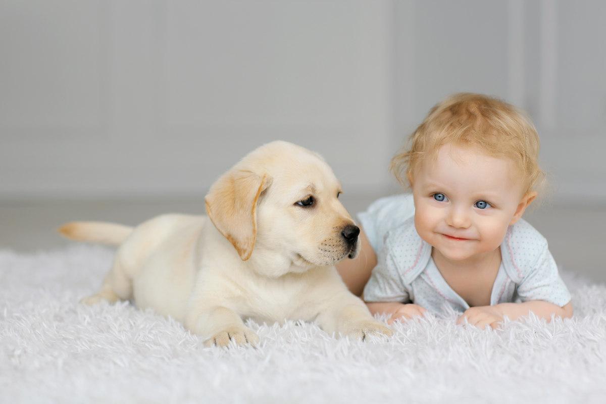 Little girl with Labrador puppy (Photo: Adobe Stock)