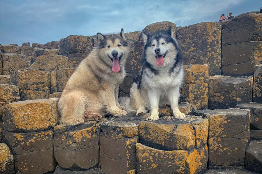 Life with Malamutes at Giant's Causeway (Photo: @lifewithmalamutes / Instagram)