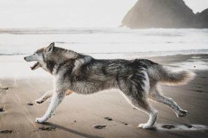 20 Wolfdogs To Follow On Instagram